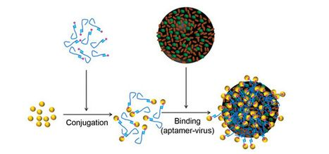 Aptamers and gold nanoparticles whisked up to spot influenza | DNA & RNA Research | Scoop.it