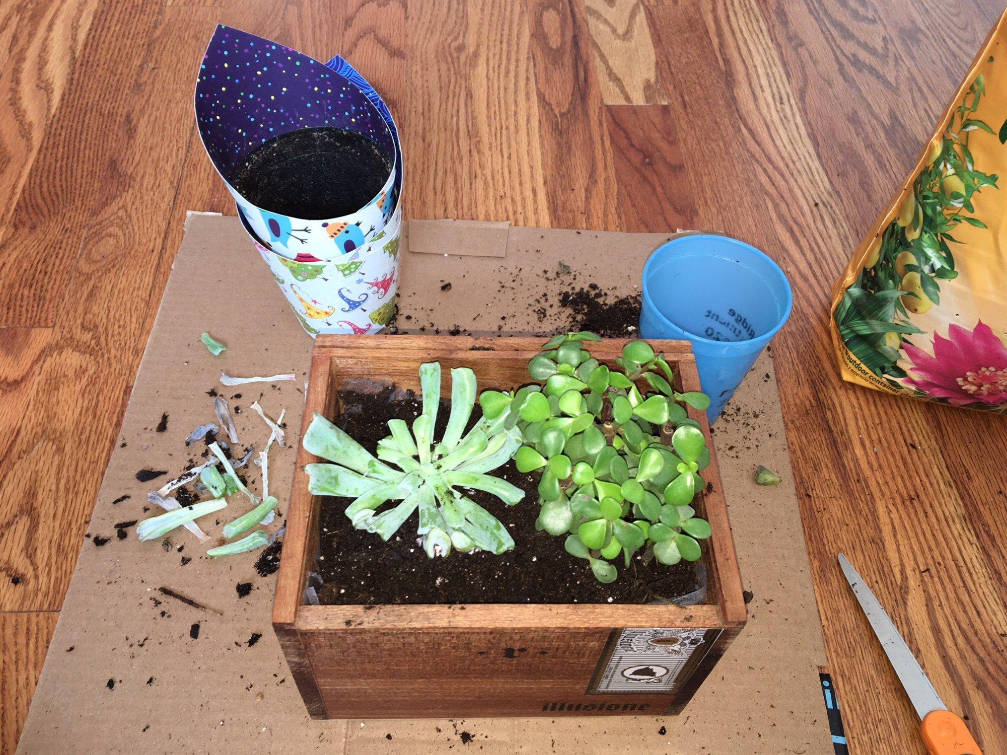 Diy succulent planter box succulent planter diy