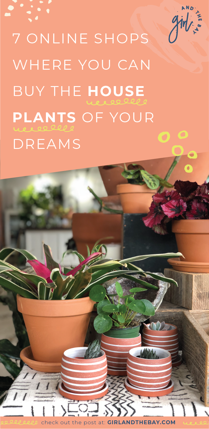 7 Online Shops Where You Can Buy The House Plants Of Your