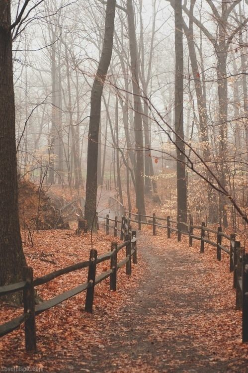 Bundling up for early morning walks in the cool, foggy autumn air is a perfect autumn tradition.