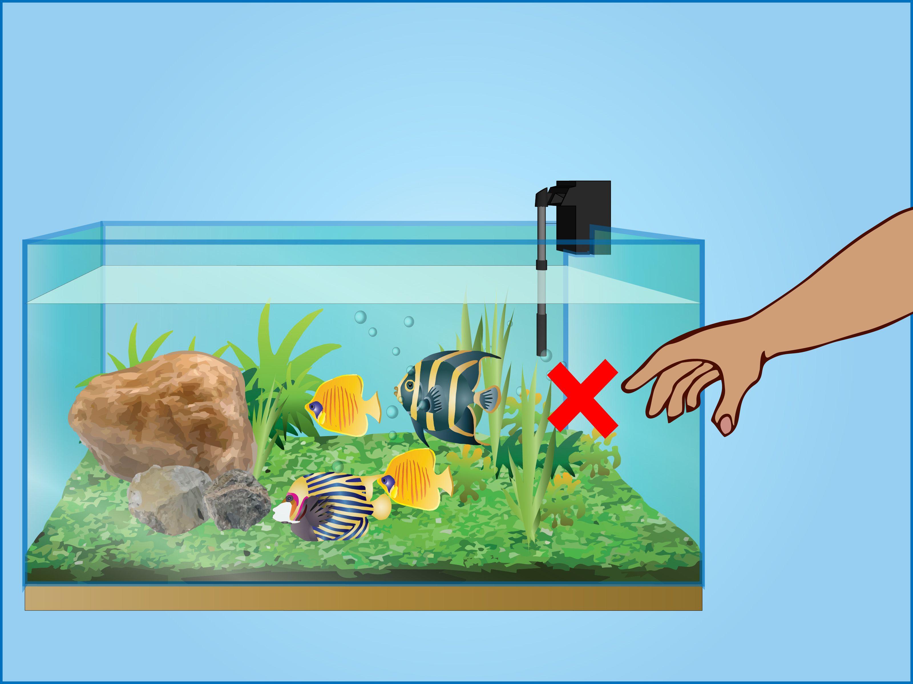 Take Care of Your Fish (Tanks) Fish tank, Take care of