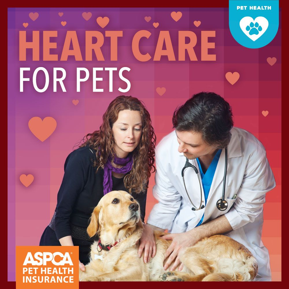 Heart Care For Pets Heart Care Pets Pet Health Insurance