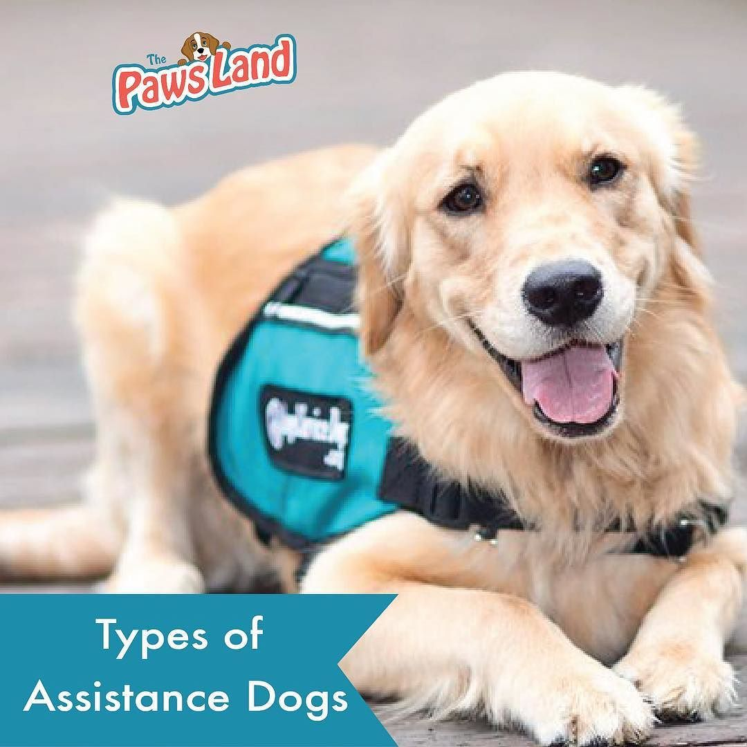 Assistance dogs not only provide a specific service to