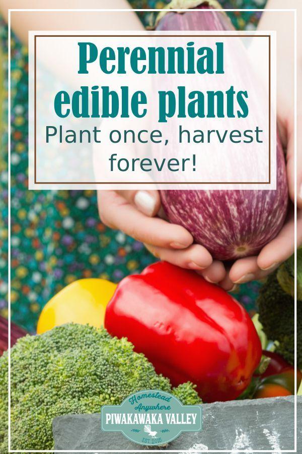 100 Perennial Vegetables For your Garden | Perennial ...