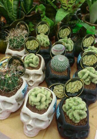 Skull plant holders with brain cactus.