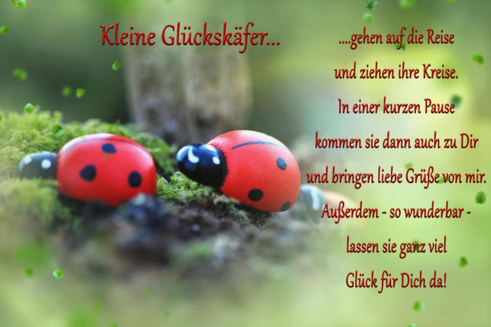 Glückskäfer gedicht Geburtstagsgedichte