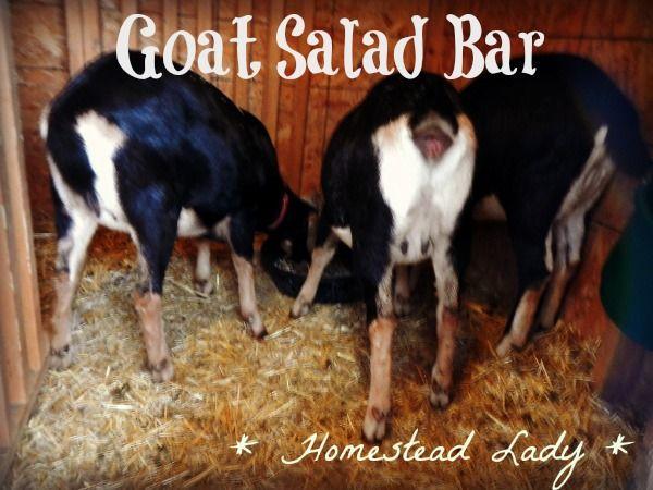 Grow a Goat Salad Bar in your Backyard. | Goat farming ...