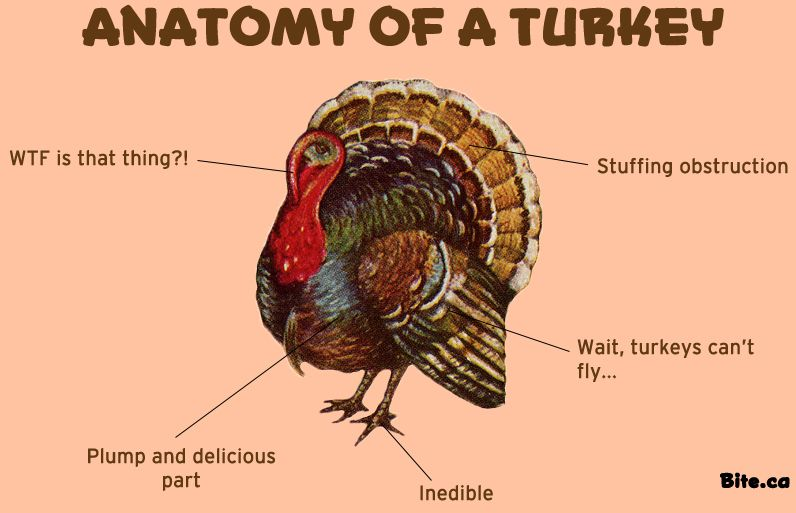anatomy of a turkey - Yahoo Image Search Results | Odd and Unique ...