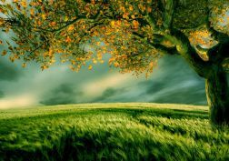 green landscapes nature trees wallpaper