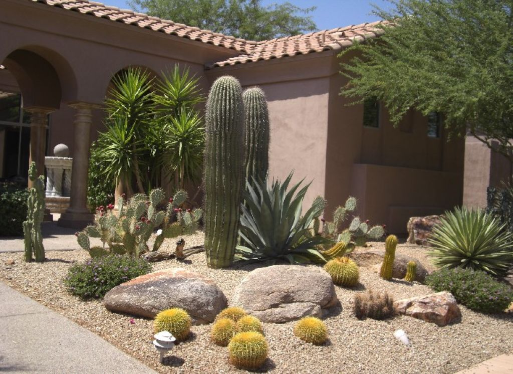 Beautiful contemporary desert landscaping idea with for Cactus garden designs
