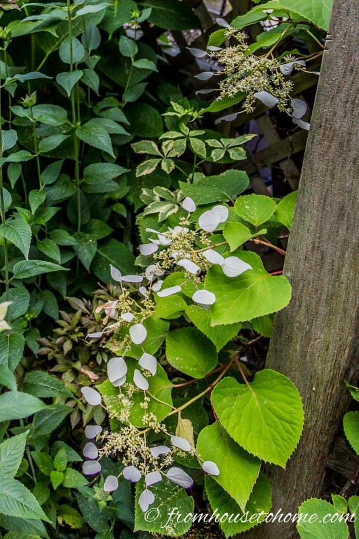 10 Hardy Plants That Look Tropical Hardy plants