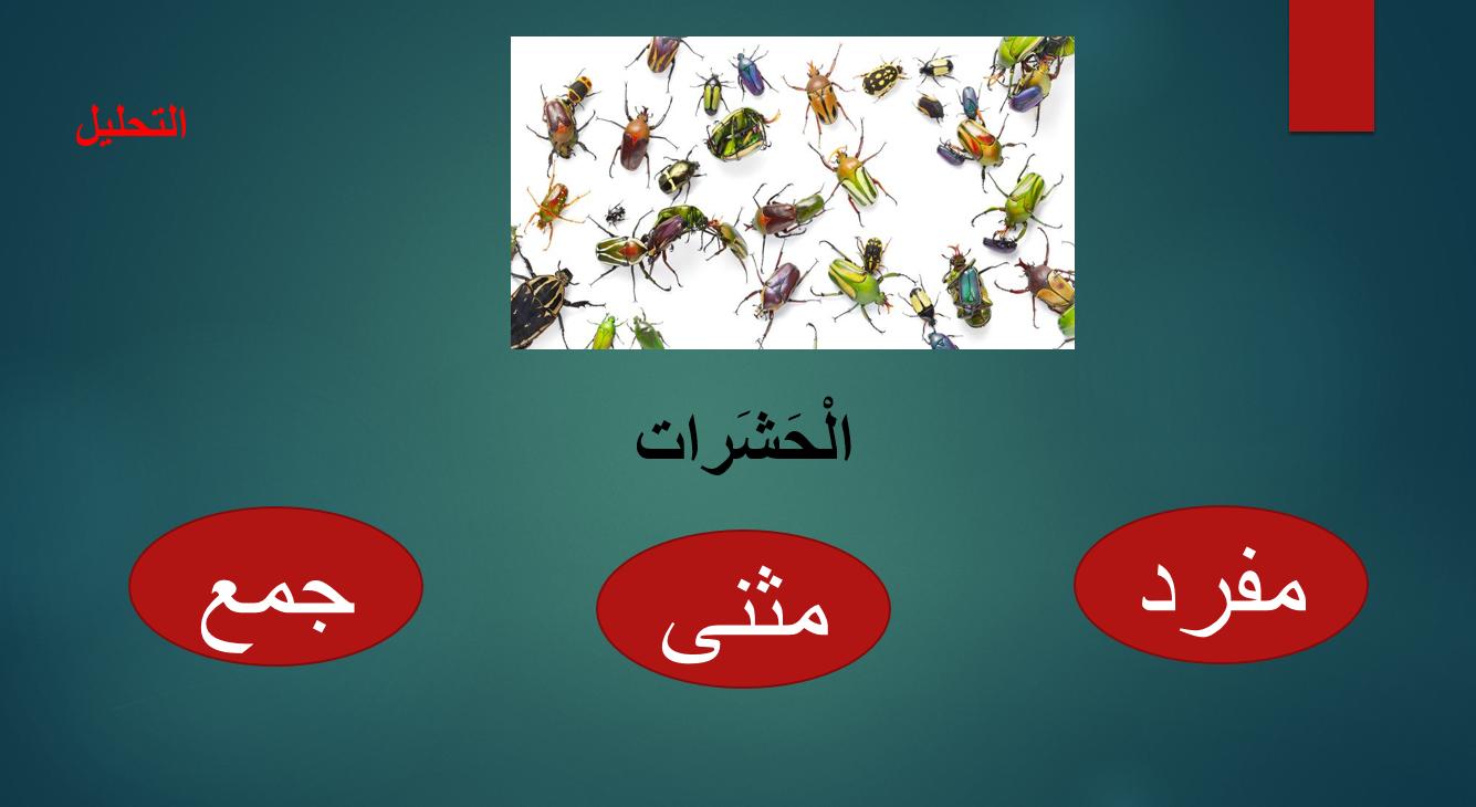 بوربوينت درس عيد الحشرات لغير الناطقين بها للصف الرابع مادة اللغة العربية Classroom Writing Classroom Writing