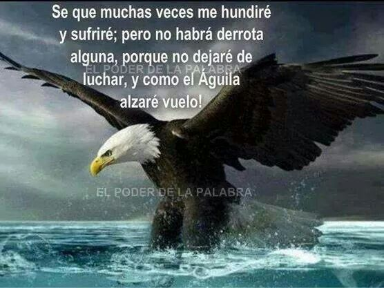 Imagenes De Aguilas Con Reflexiones Para Whatsapp Frases