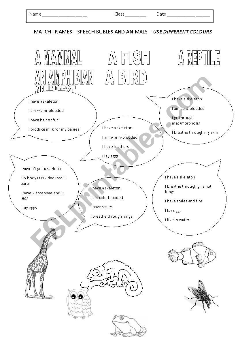 English worksheets ANIMALS CLASSIFICATION in 2020
