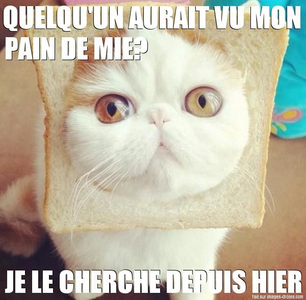 Chat pain de mie images pinterest images dr les chat marrant et dr le - Photo chat marrant ...