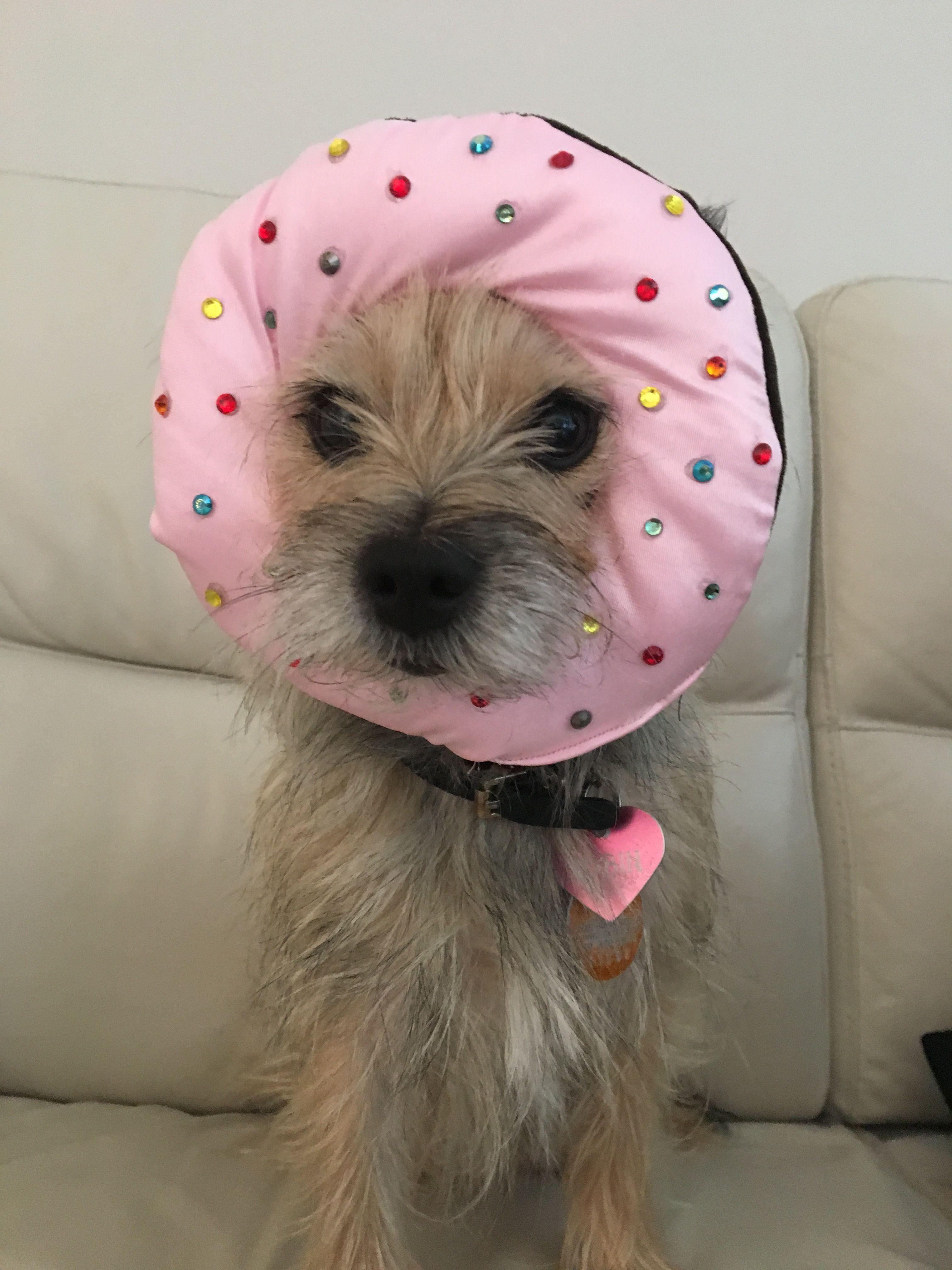 Donut Dog Costume Dog Costumes Dog Costume Donut Costume