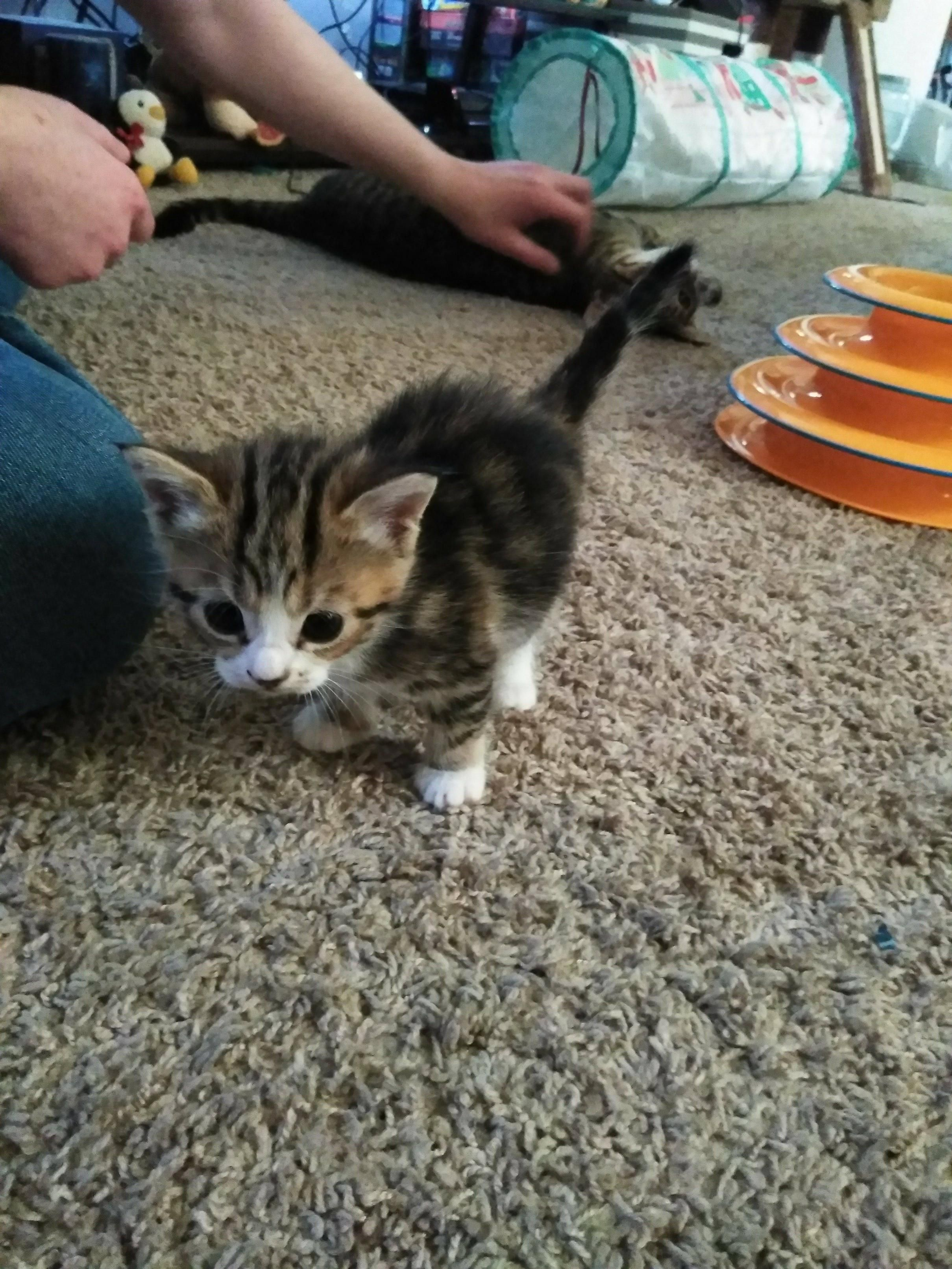Freyja Will One Month Old This Saturday Cute Cats And Kittens Cats And Kittens Cute Cat