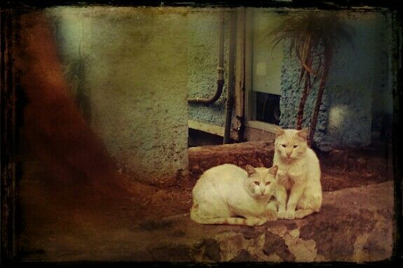 Vecinos. #cats #kittens