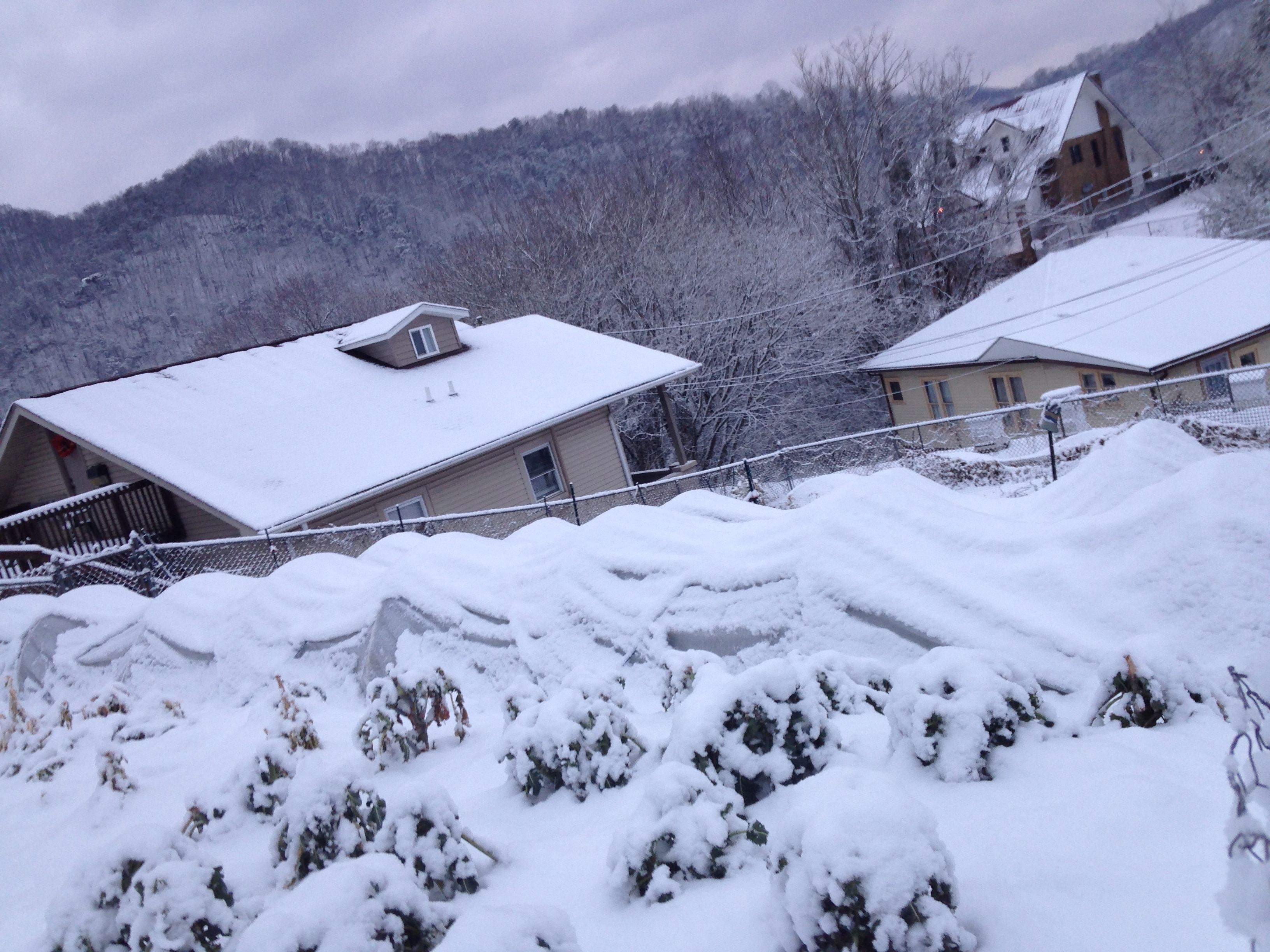 The garden under snow on February 3rd.
