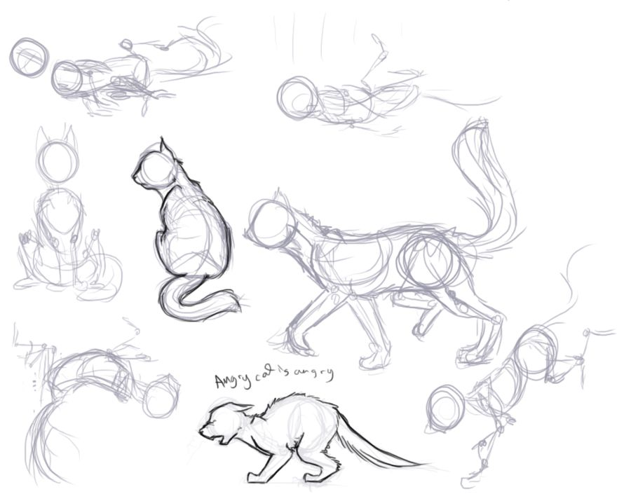 Kitty Poses Cat Drawing Tutorial Sketches Art Reference Poses