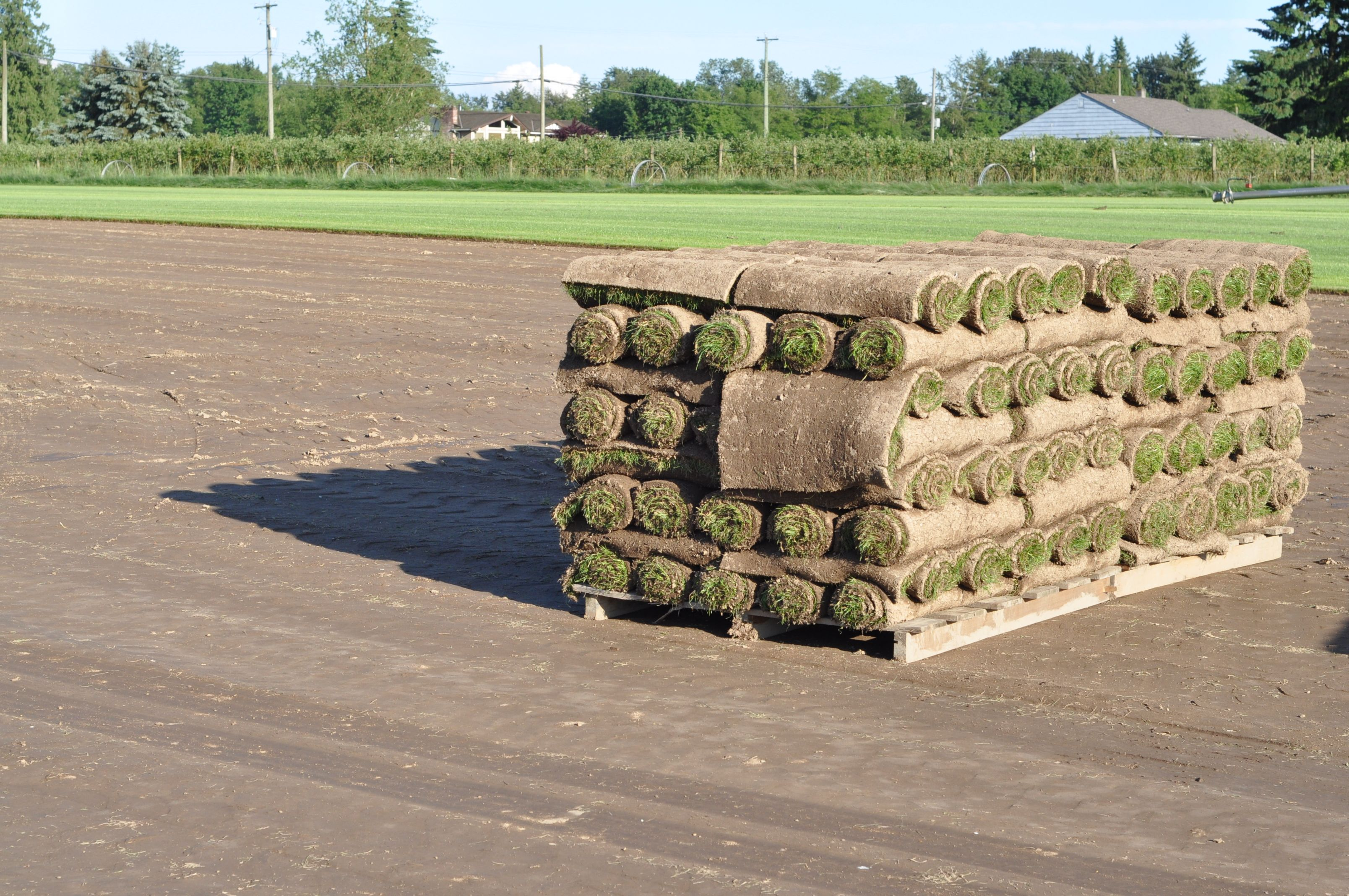 Quality Topsoil Sod Grass For Sale In Bc Grass For Sale Sod Grass Top Soil