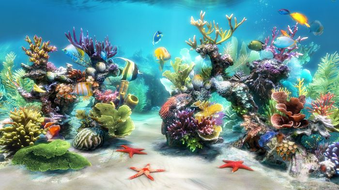 Smarterm Office For Terminal Services 5 User Server Pack Aquarium Live Wallpaper Tank Wallpaper Aquarium Backgrounds