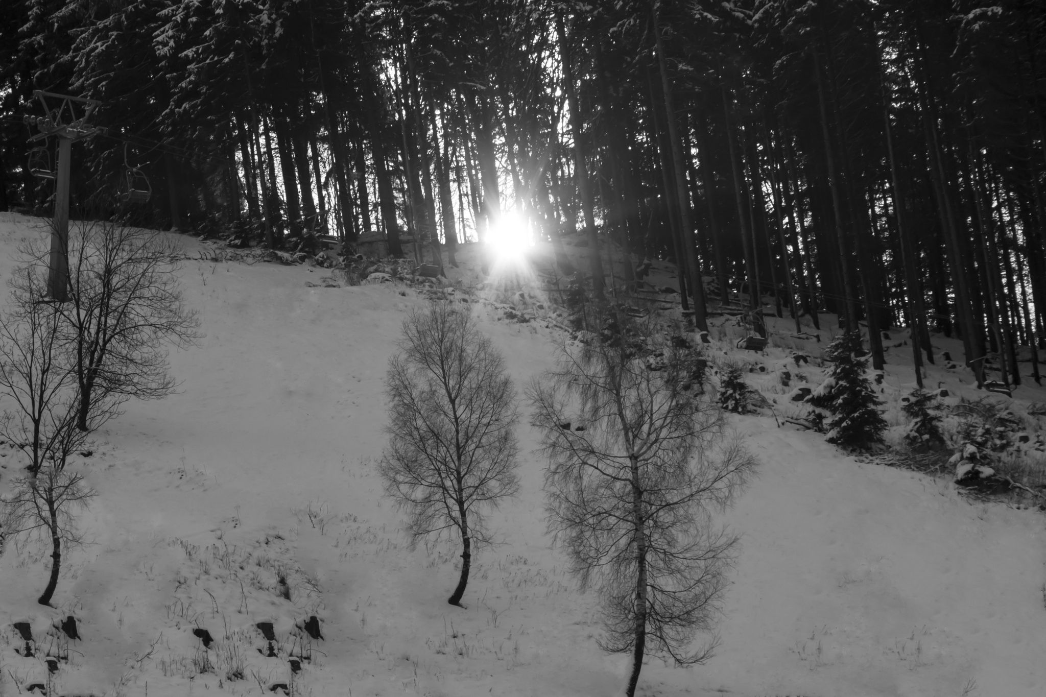 Hope at the End of the Road - Sunset in black and white between trees