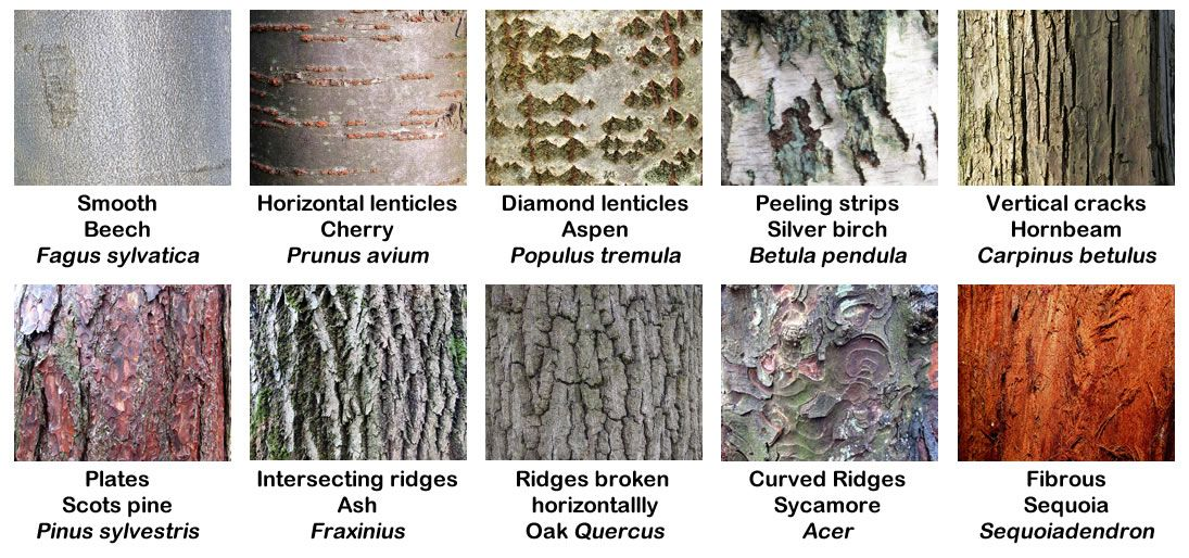 Absolutely Barking! (With images) Tree bark