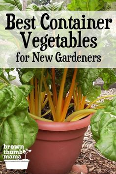Here are the 5 best container vegetables for beginning gardeners Theyre all easy to start from seed and will grow happily in pots on your patio driveway next to your pool...