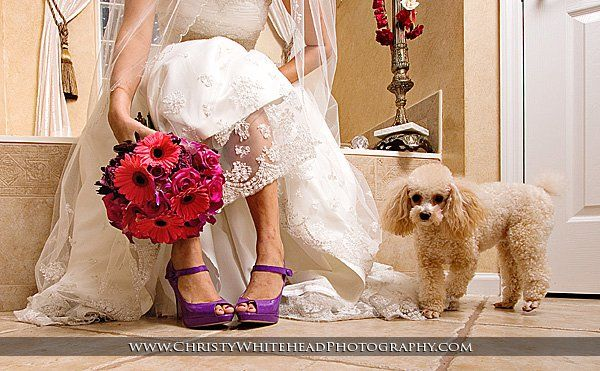Florals by a Fantasy in Flowers. Photography by Christy Whitehead. Model - Abby the poodle