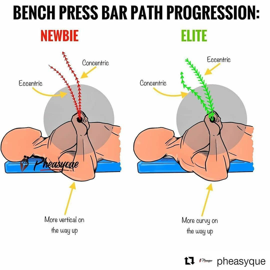 Analisys Of The Bench Bar Path Newbies Vs Elite Lifters Here S A Quick Analisys Difference Between The Ba Gym Workout Tips Gym Tips Chest Workout Women