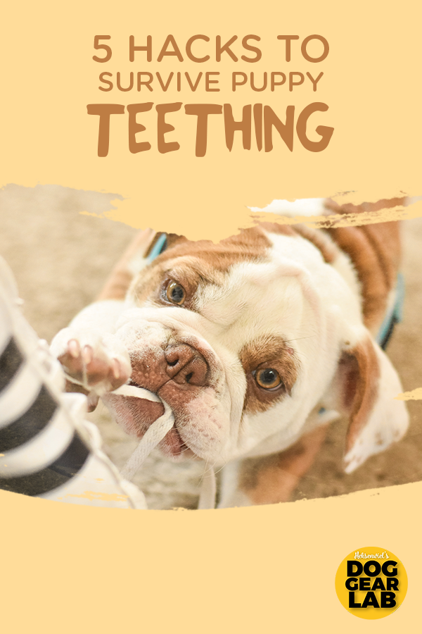 5 Hacks To Survive Puppy Teething Puppy Teething Dog Training Dogs