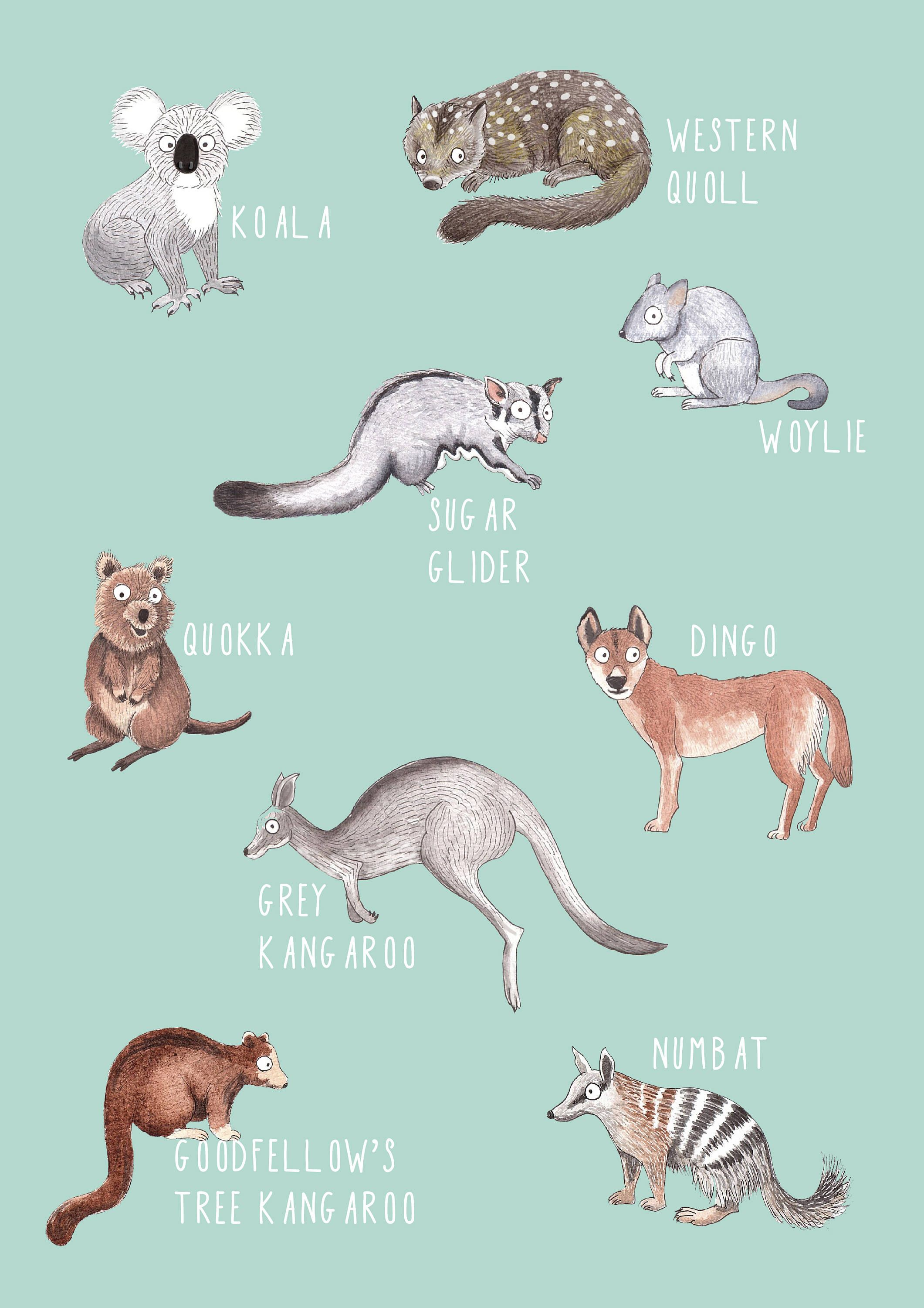 June Sale On Laser Prints Australian Mammals B Laser Or Giclee Print A4 Size In 2020 Cute Australian Animals Australian Mammals Cute Animal Drawings