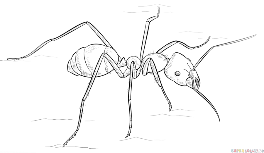 How to draw an ant step by step. Drawing tutorials for