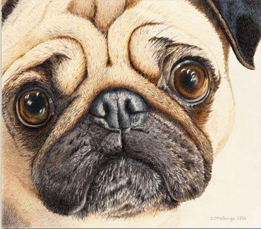 Members Gallery Women Painters Of Washington Dog Portraits