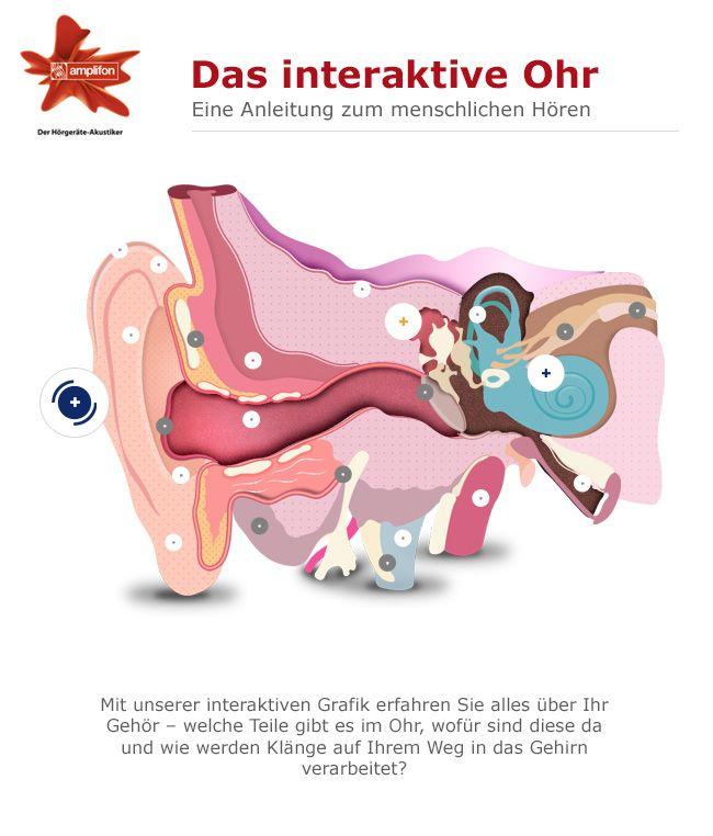 Das interaktive Ohr zeigt Ihnen, wie das menschliche Gehör funktioniert http://interaktives-ohr.amplifon.de/