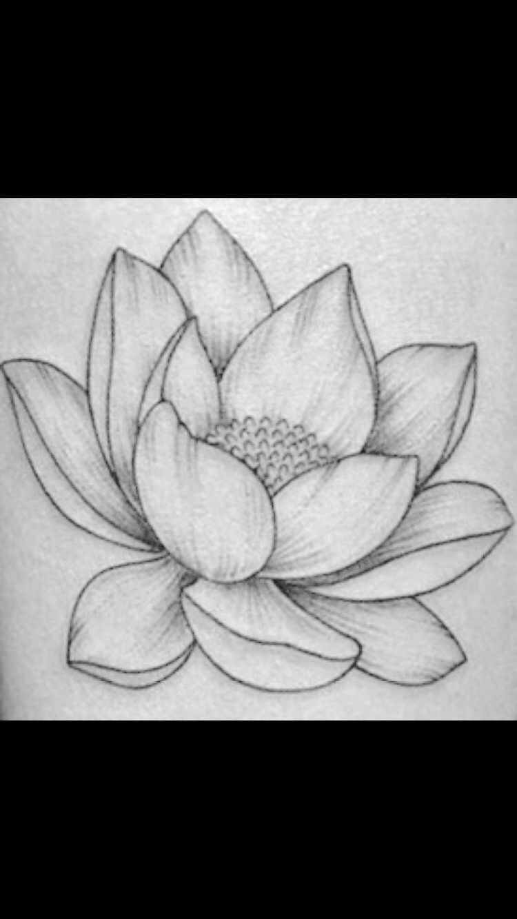 Pin by Vince Jackson on Ideas | Realistic flower drawing