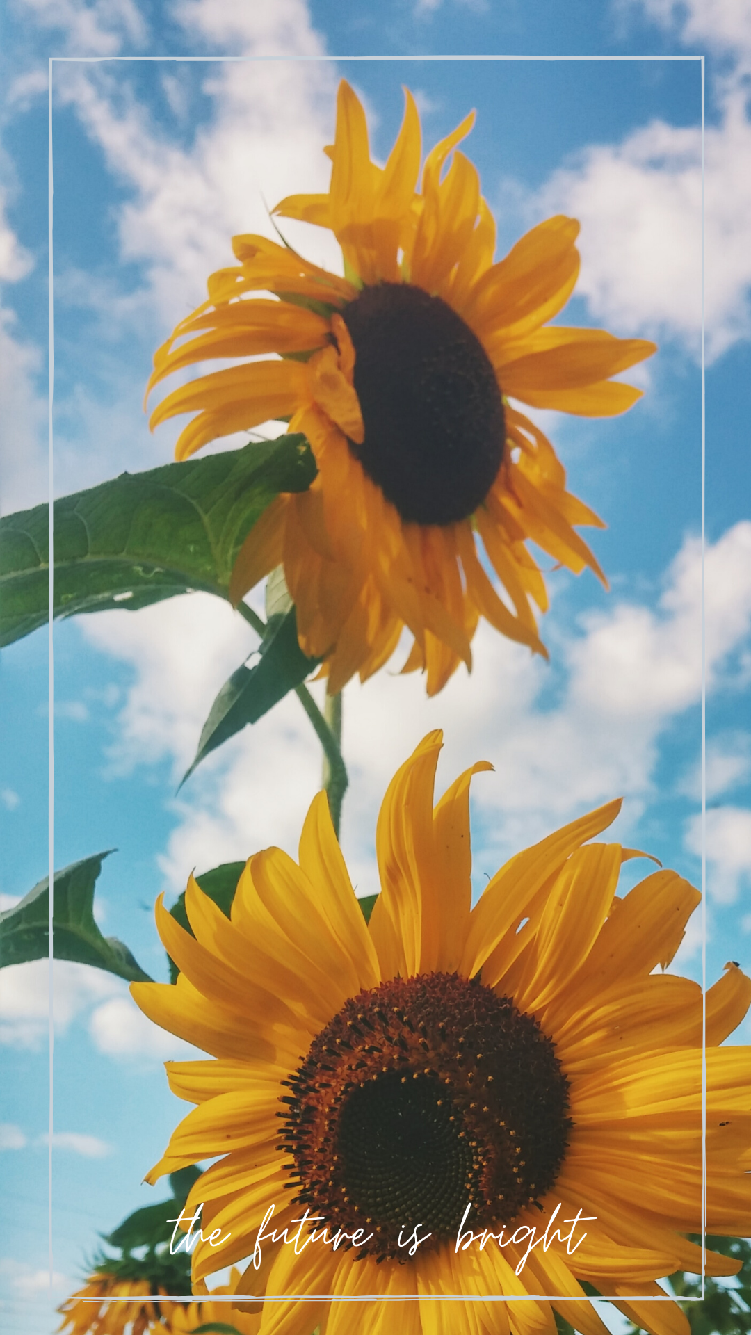 Sunflower Wallpaper iphone background for january