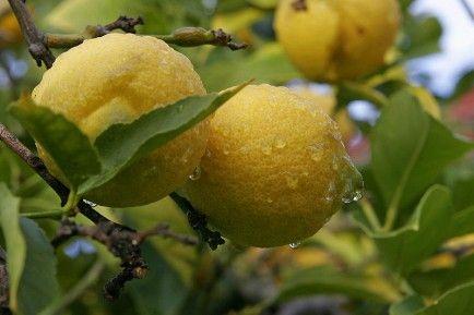 Citrus Oil-10 Essential Oils That Help Create a Calm Home - Babble