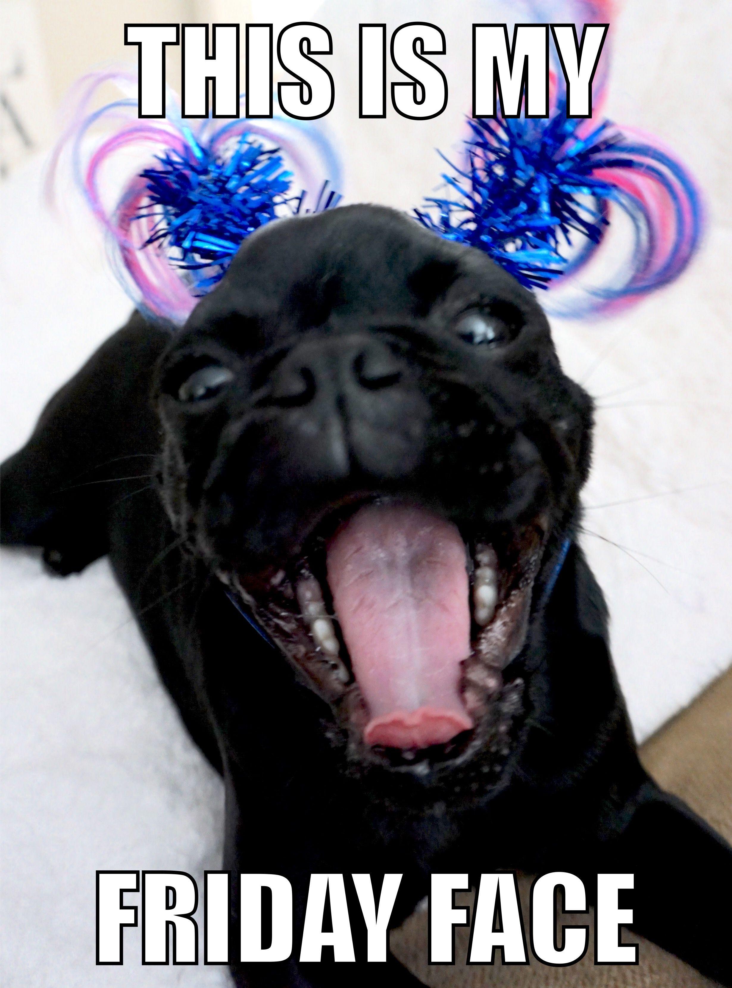 friday friday vibes funny pug funny meme pug meme friday