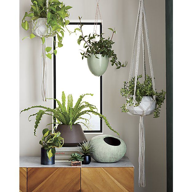 Shop Macrame Plant Holder Crafty Hand Braided Macrame Suspends Potted Plants With 70s Nostalgia Four C Hanging Plants Indoor Hanging Plants Plant Holders