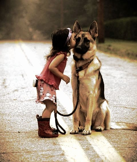 So Sweet Little Girl Kissing A German Shepherd Cute Animals