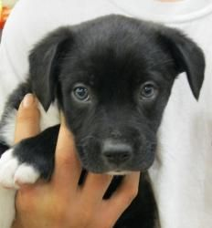 Adopt Dot On Cute Puppy Names Puppies Labrador Retriever Dog