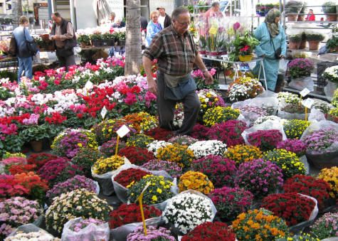 Pin By Sherry Hayslip On Spring 2013 Palette Flower Market