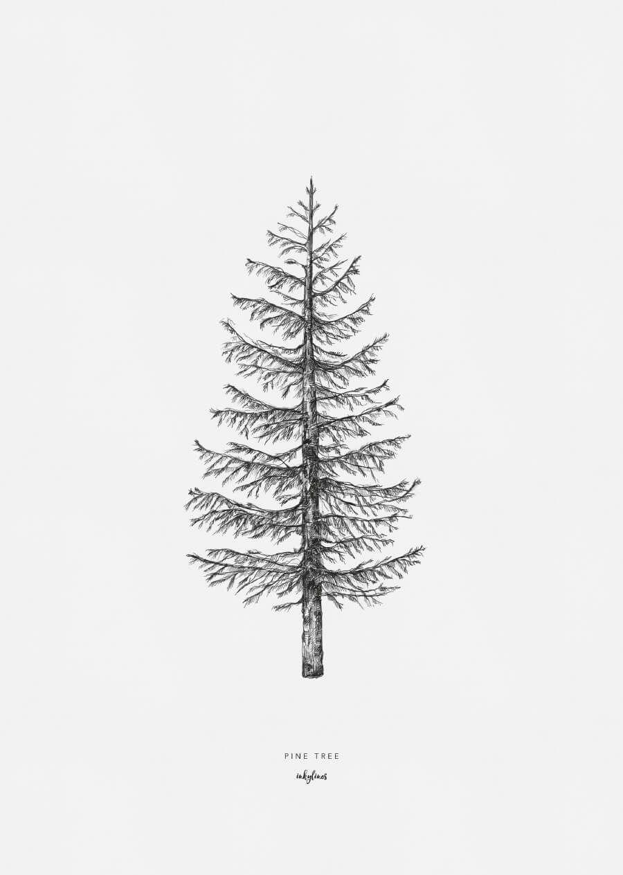 Pine tree in 2019 | Christmas | Tree drawings pencil, Tree ...
