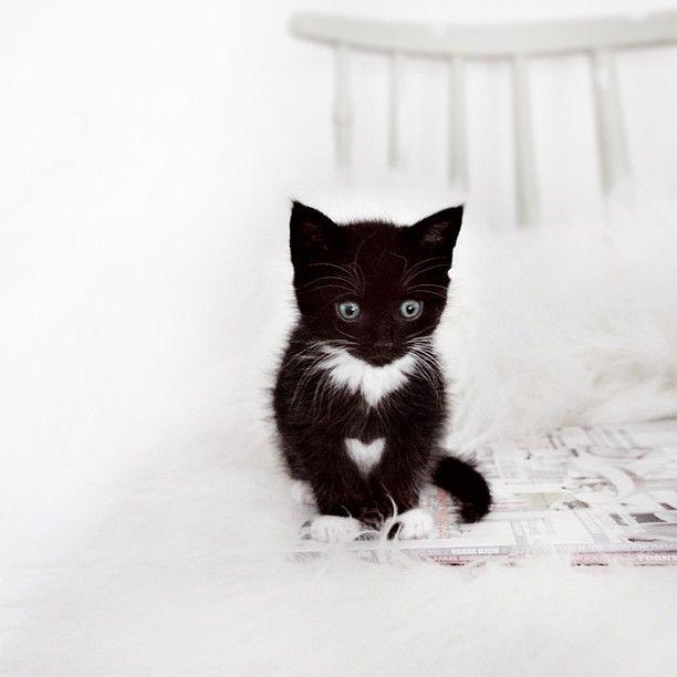 Kitty Love Funny Cutest Most Adorable Free Your Wild See More Kittens Cats Untamedo Bezaubernde Katzchen Seltsame Katzen