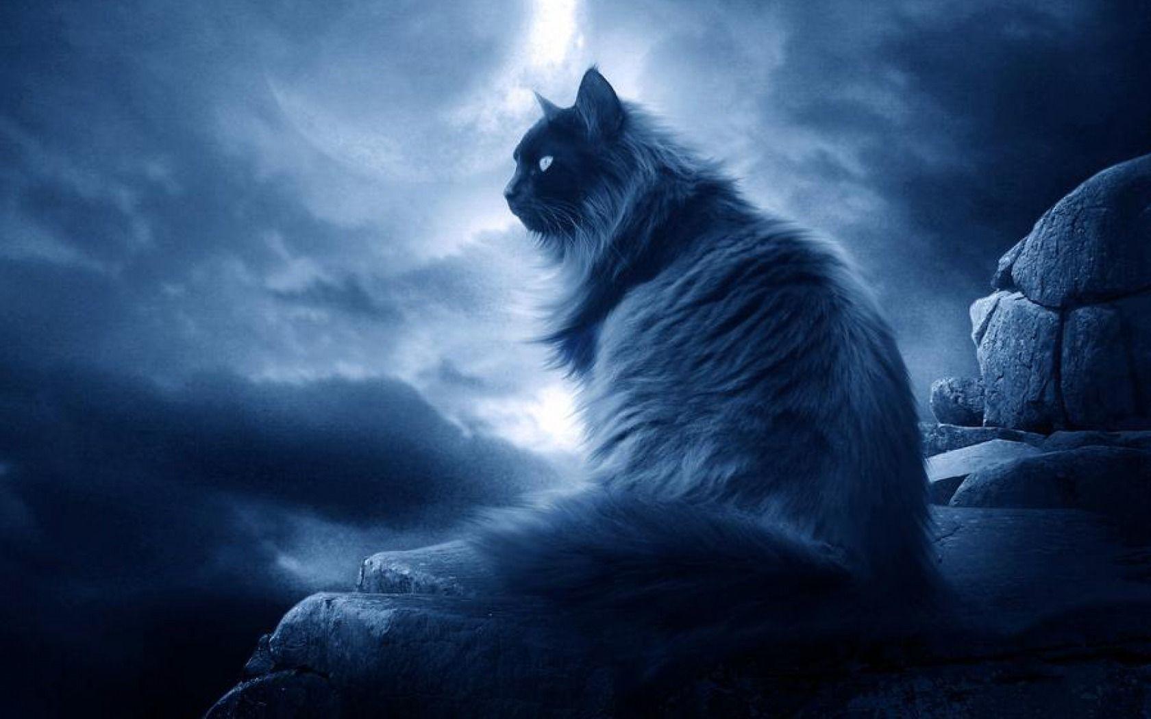 Download Wallpaper Cat Mystical - 179e38ba2aeb442733628b9f59d3f694  You Should Have_726530 .jpg