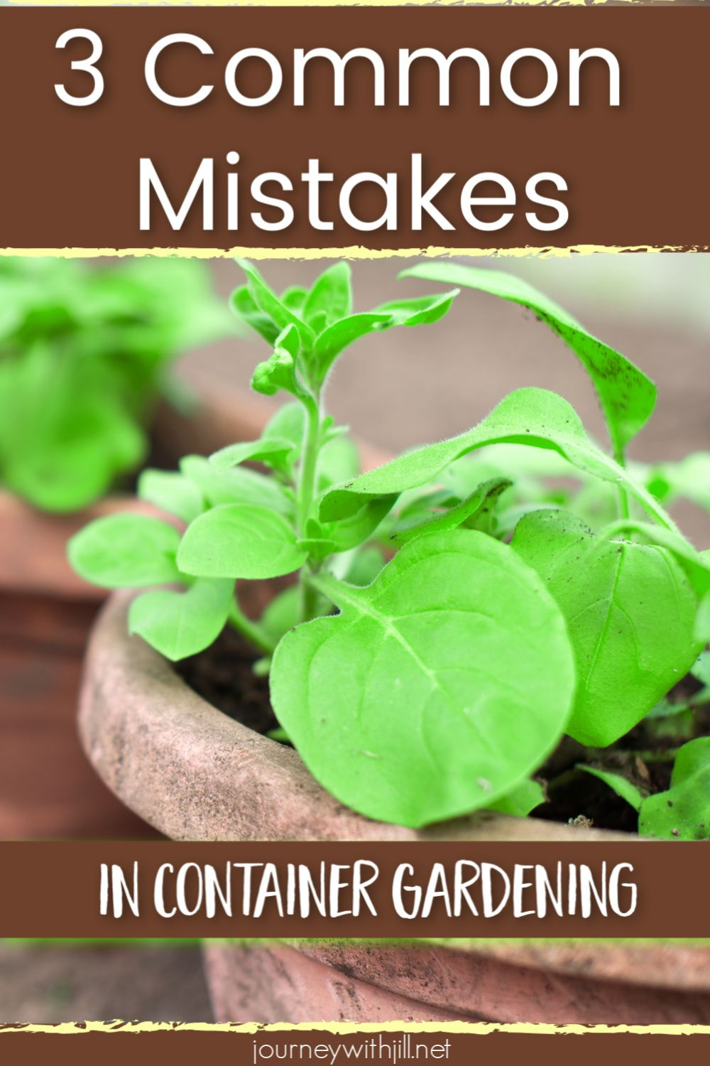 3 Common Container Gardening Mistakes Growing Vegetables 640 x 480