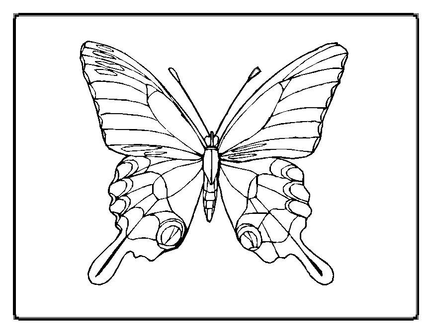 butterfly coloring pages - Coloring Template