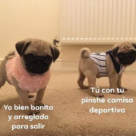 Pin De Karla Chavarria En Pugs Cute Meme Gracioso Memes Divertidos Memes Graciosos